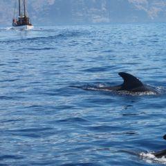 Playa de las Americas Whale Watching, tickets, trips, tours, cheap, hotels, reservations, restaurants, Puerto Colón, Tenerife, Puerto de la Cruz, excursions, events