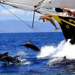 Tenerife Dolphins and Whales, excursions, trips, tours, tickets, cheap, events, reservations, restaurants, hotels, Playa de las Américas, Puerto Colón, Puerto de la Cruz