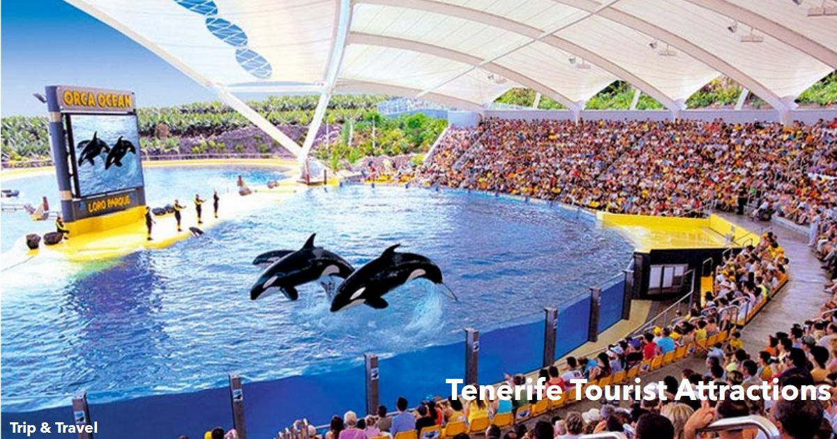 Tenerife Tourist Attractions, hotels, tickets, reservations, Canary Islands, Spain, Loro Parque, Siam Park, Aqualand, Jungle Park, restaurants, car renting, dolphins show
