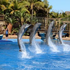 Playa de las Américas Things To Do, tickets, cheap, Tenerife, events, reservations, restaurants, hotels, excursions, dolphins show, attractions, Puerto Colón, Spain